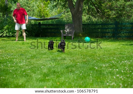 Middle aged man playing ball with his miniature poodle and toy poodle puppy in the summer.