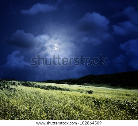 midnight on the meadow,  natural backgrounds