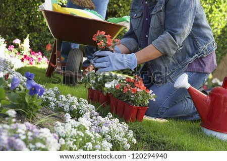 Midsection of a middle aged woman planting flowers in garden #120294940