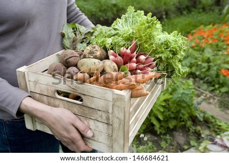 Midsection of woman carrying crate with freshly harvested vegetables in garden