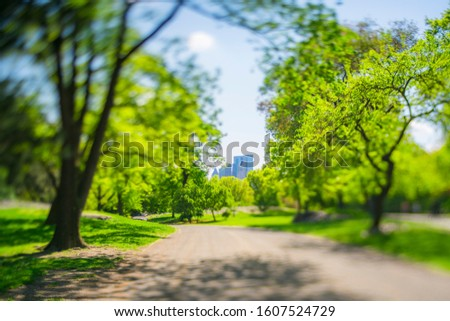 Midtown Manhattan buildings stand beyond the many growing fresh green trees along the Park road in Central Park in Central Park New York City NY USA on May. 08 2019.