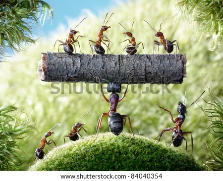 mighty ant Camponotus Herculeanus holding log with ants Formica Rufa - stock photo