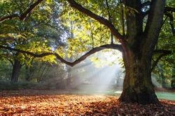 mighty oak tree wrapped in sunshine