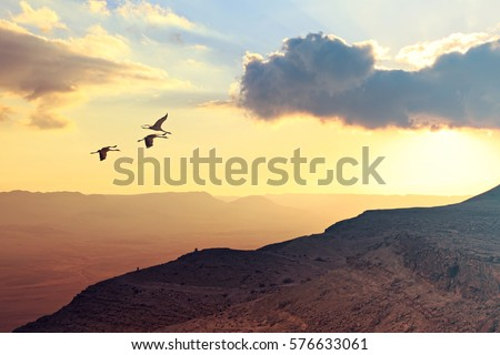 Migrating cranes fly ( flock, flight ).Free birds flying at sunset over the foggy mountains in the wild. Nature migration. Wonderful world. Environment protection and travel concept.Toned soft colors.