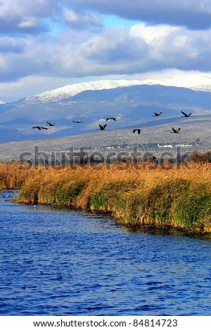 Migrating ducks over Hula lake reserve (Israel) at spring on the way back to Europe