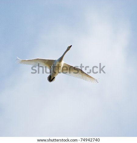 Migration bird in Latvia #74942740