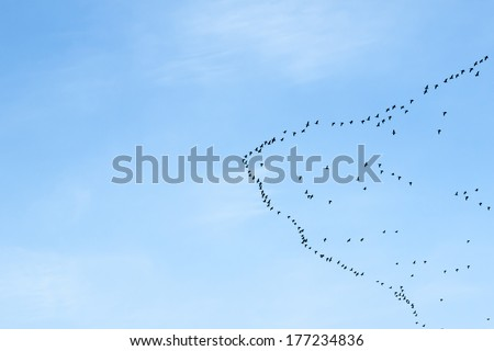 migration of birds to the north or to the south
