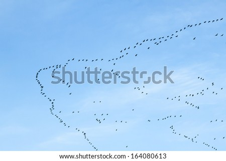migration of birds to the south or maybe to the north