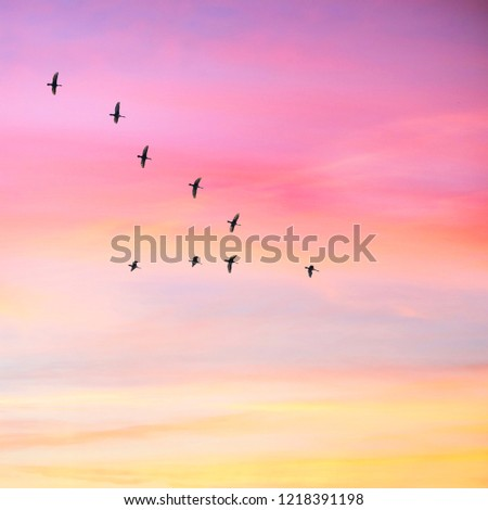 Migratory birds flying in the shape of v on the cloudy sunset sky. Sky and clouds with effect of pastel colored.  #1218391198