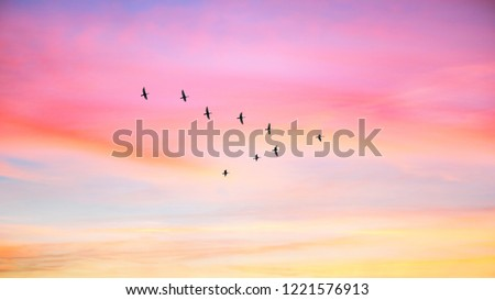 Migratory birds flying in the shape of v on the cloudy sunset sky. Sky and clouds with effect of pastel colored.  #1221576913