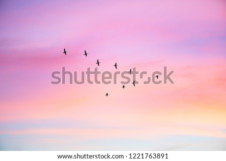Migratory birds flying in the shape of v on the cloudy sunset sky. Sky and clouds with effect of pastel colored.  #1221763891