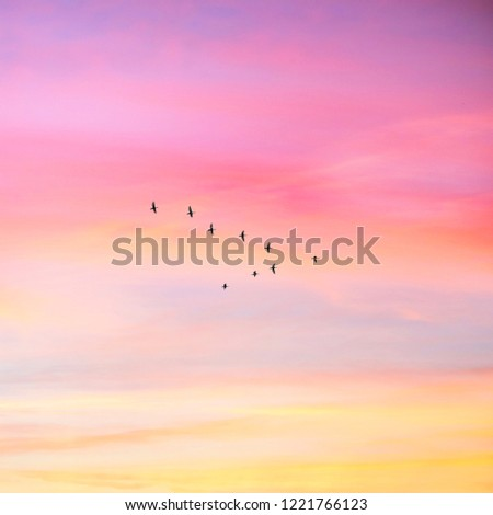 Migratory birds flying in the shape of v on the cloudy sunset sky. Sky and clouds with effect of pastel colored.  #1221766123