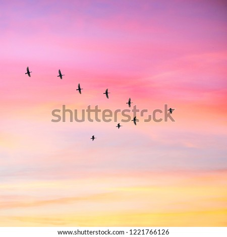 Migratory birds flying in the shape of v on the cloudy sunset sky. Sky and clouds with effect of pastel colored.  #1221766126
