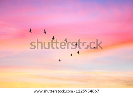 Migratory birds flying in the shape of v on the cloudy sunset sky. Sky and clouds with effect of pastel colored.  #1225954867
