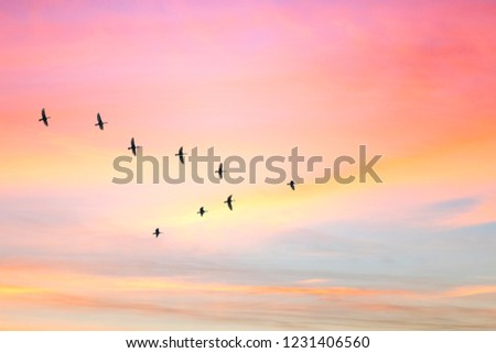 Migratory birds flying in the shape of v on the cloudy sunset sky. Sky and clouds with effect of pastel colored.  #1231406560