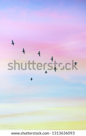 Migratory birds flying in the shape of v on the cloudy sunset sky. Sky and clouds with effect of pastel colored.  #1313636093