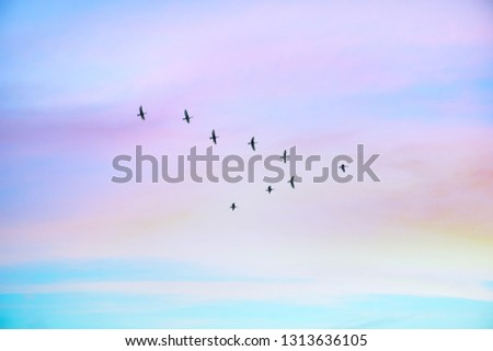 Migratory birds flying in the shape of v on the cloudy sunset sky. Sky and clouds with effect of pastel colored.  #1313636105