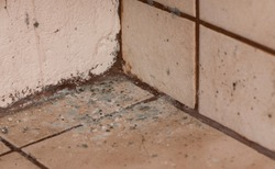 Mildewed walls with different sorts of mold (close-up shot)