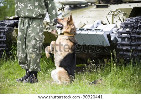 Military dog training german shepherd