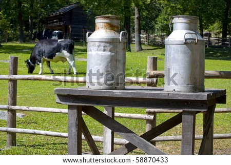 Milk cans on a bench, a cow feeding grass in the background