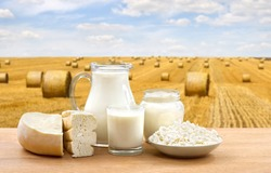 Milk, cheese, cottage cheese and sour cream on wooden table on a background field with straw bales after harvest