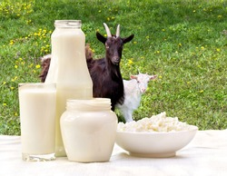 Milk, cottage cheese and sour cream on the background of meadows with goat and goatling