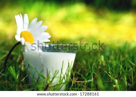 Milk in the garden