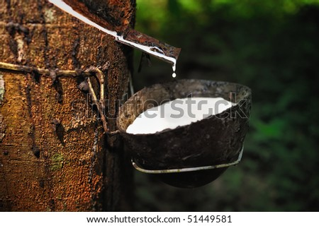 Milk of rubber tree into a wooden bowl