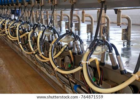 Milking parlor in dairy farm #764871559