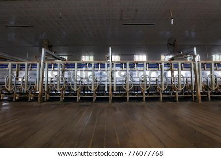 Milking parlor in dairy farm #776077768