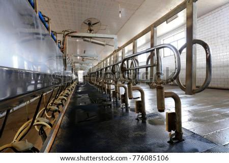Milking parlor in dairy farm #776085106