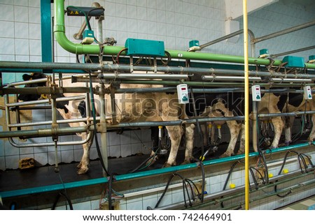 Milking room on a cow farm (dairy business, agribusiness, livelihood - concept)