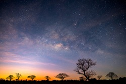 Milky way with stars,silhouette tree in africa with sunrise.Tree silhouetted against a setting sun.Dark tree on open field dramatic sunrise.Typical african sunset with acacia trees in Masai Mara,Kenya