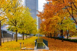 Millennium  Park view with autumn colors in Chicago of USA