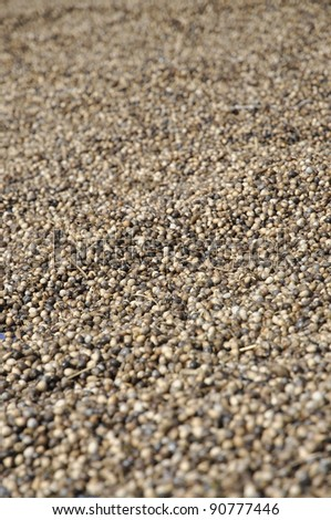 Millet Seed Many Background Day - stock photo