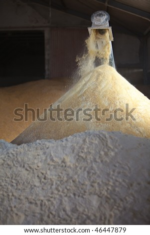 Milling corn for cattle feed inside a large shed