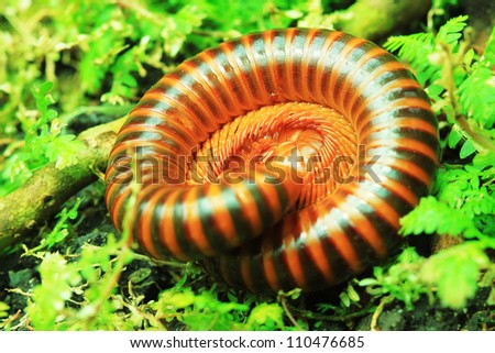 Millipede on a green leaf