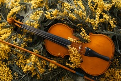 Mimosa and violin. Spring melody. Background.