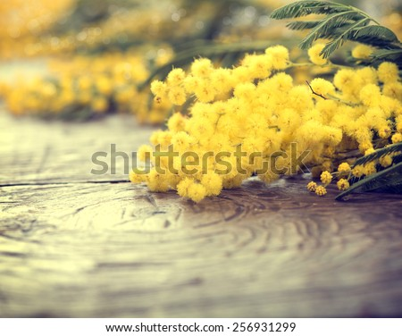 Mimosa spring flowers on the wooden table. Mother\'s Day or Easter design. Springtime. Toned photo
