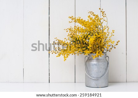 mimosa yellow spring flowers in vintage aluminum cans on white barn wall background #259184921