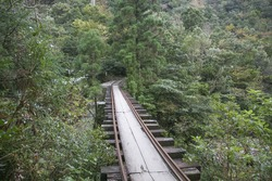 Minecart rail in Yakushima forest