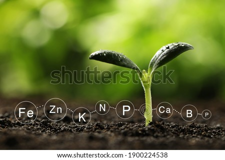 Mineral fertilizer. Young seedling growing in soil, closeup Photo stock ©