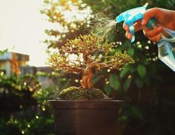 Mini Bonsai Tree,Bonsai plant is an art and wonderful way to relax after a hard days work, mini bonsai plants is a popular hobby in Asia. Mini Bonsai Tree Gardening Concept.