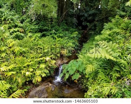 Mini Hawaiian Waterfall Lush Green #1463605103
