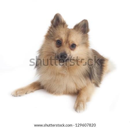 Mini kees isolated on white background