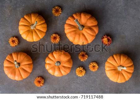 Mini Orange Pumpkin and mum blossoms #719117488