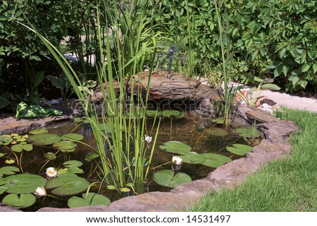Mini pond in the garden