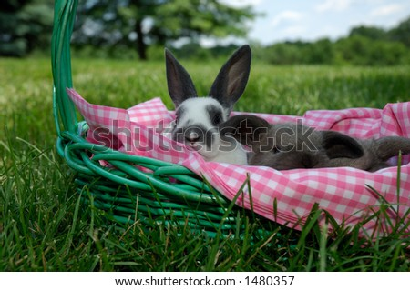 mini rex baby rabbit and a silly looking holland lop baby rabbit in an easter basket with a pink and white checked lining outside on a sunny day