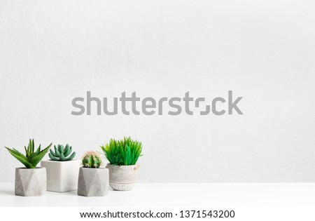 Mini succulent and grassy plants over grey wall with copy space #1371543200
