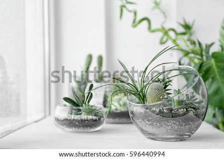 Mini succulent garden in glass terrarium on windowsill